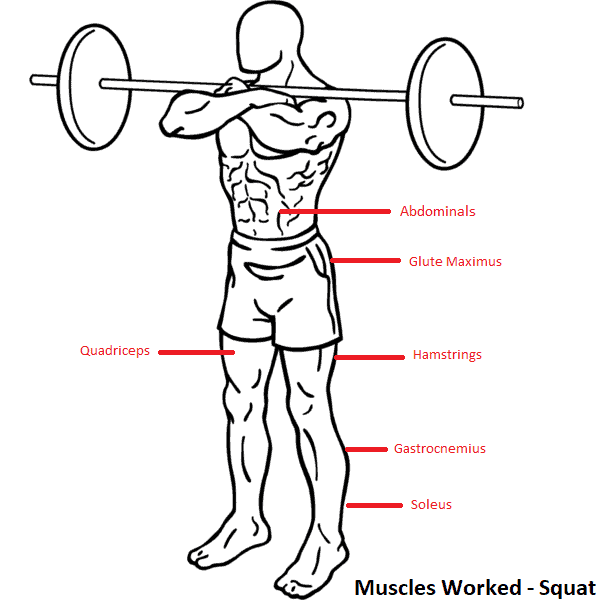 barbell front squat muscles worked