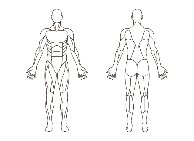 unlabelled muscular anatomy of male