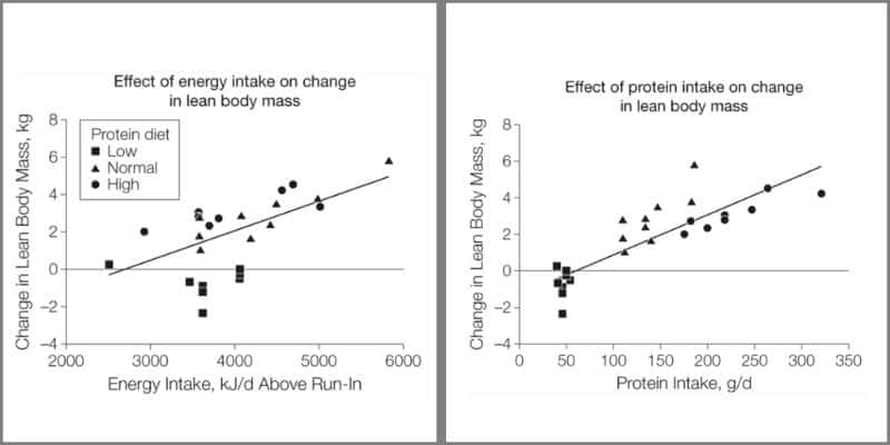 Scientific data representing how increased caloric and protein intake increase LBM.
